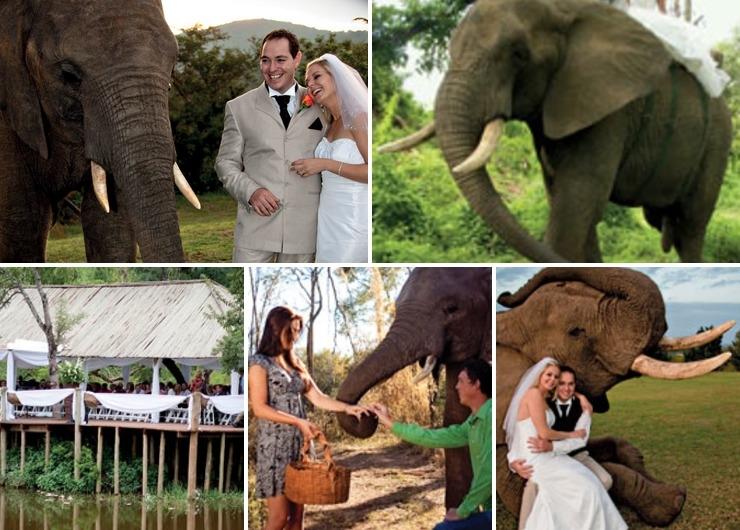 Elephant Whispers Weddings
