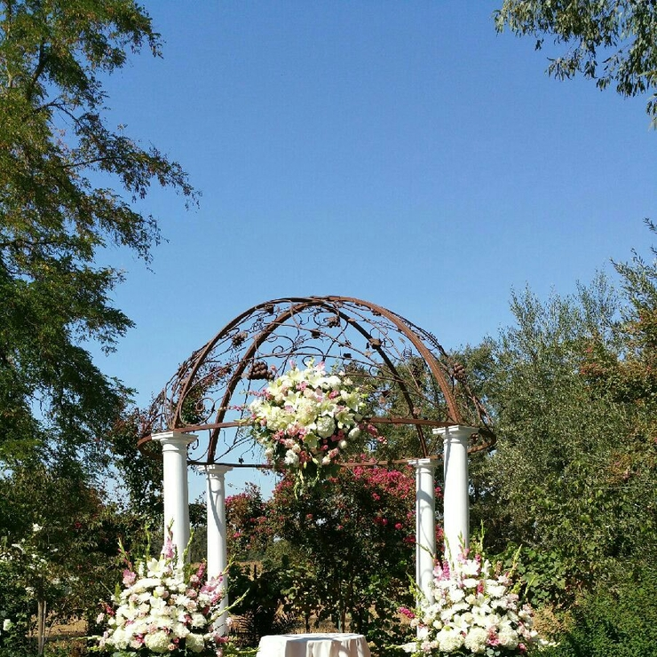 Wedding at vinyard