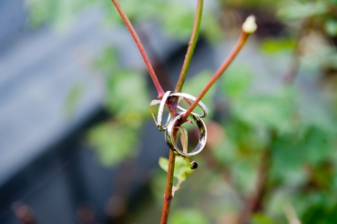 White wedding rings