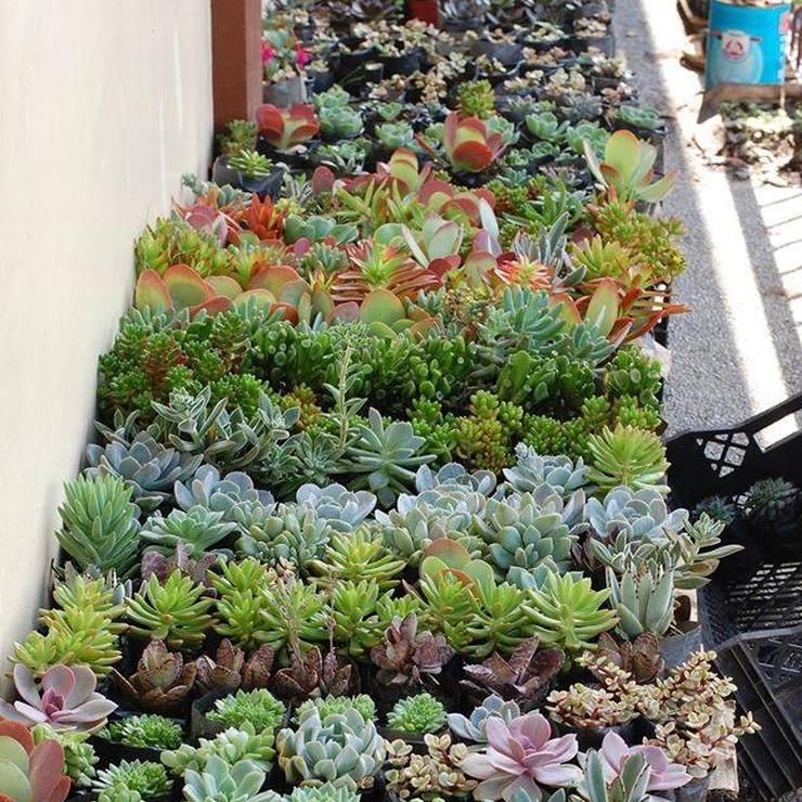 Ornamental Plant Souvenirs