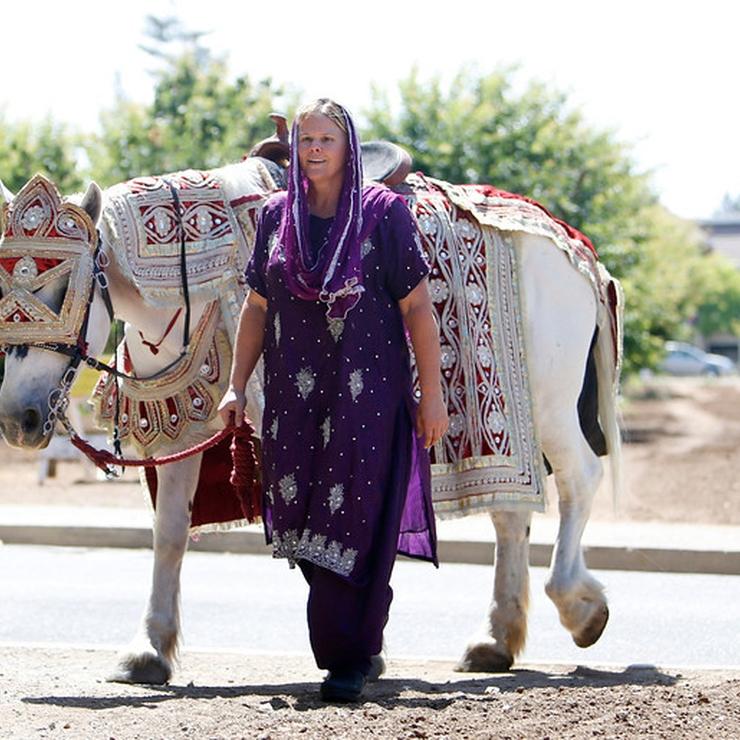 Baraat Horses