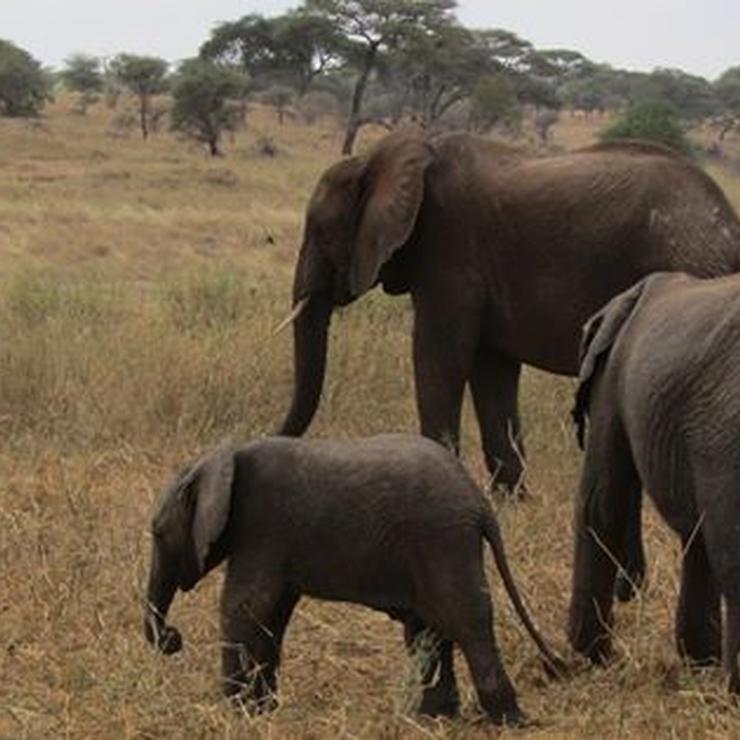 Tanzania Life time Adventure holidays