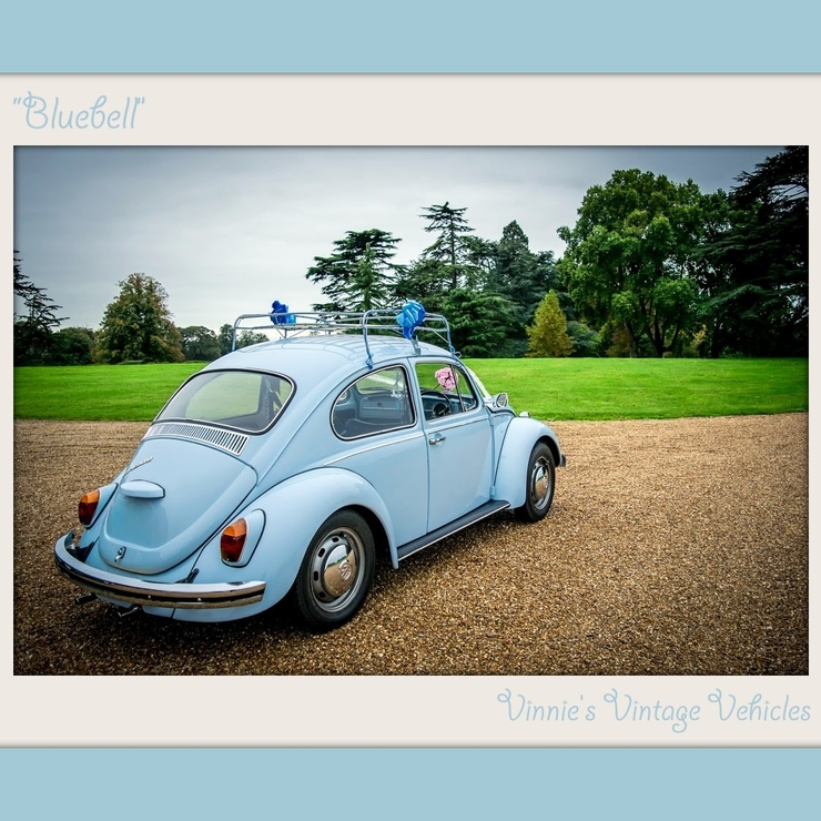 Bluebell the Beetle