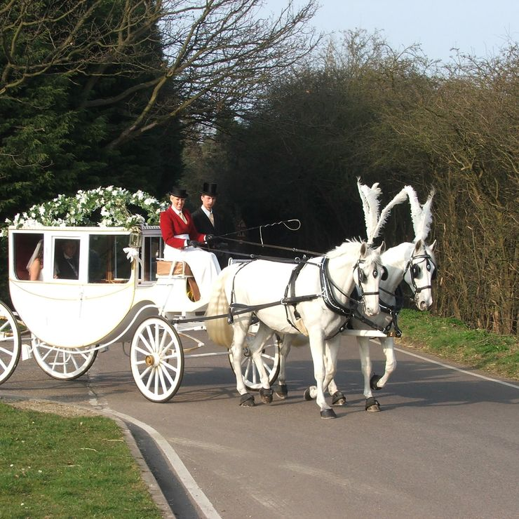 carltoncarriages white horses and carriages