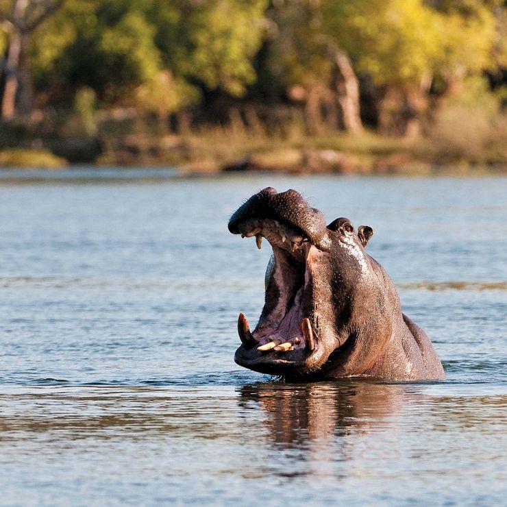 Zambezi Canoe Trips