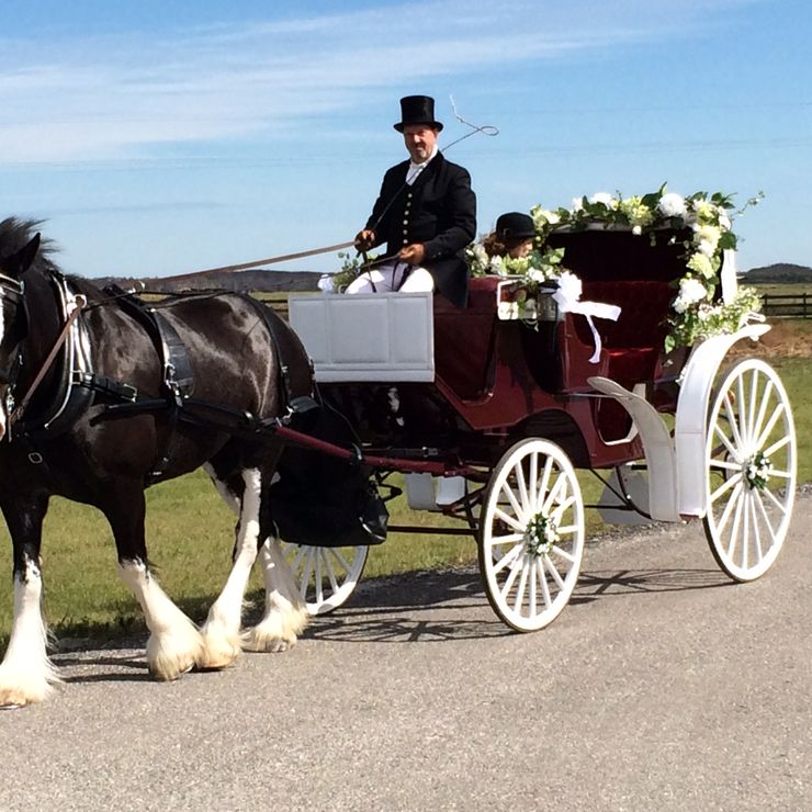 Horse-drawn Carriages in Florida