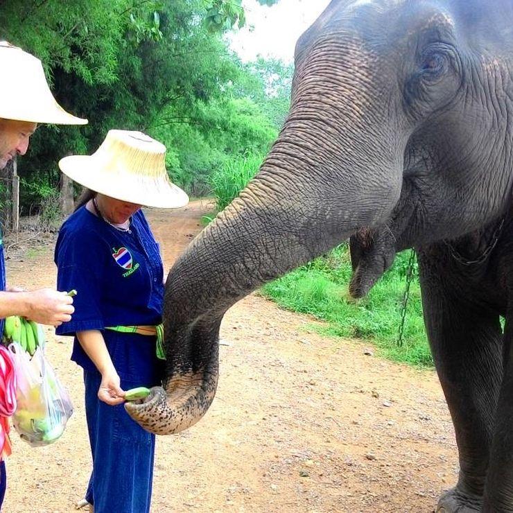 Honeymoon love of elephants