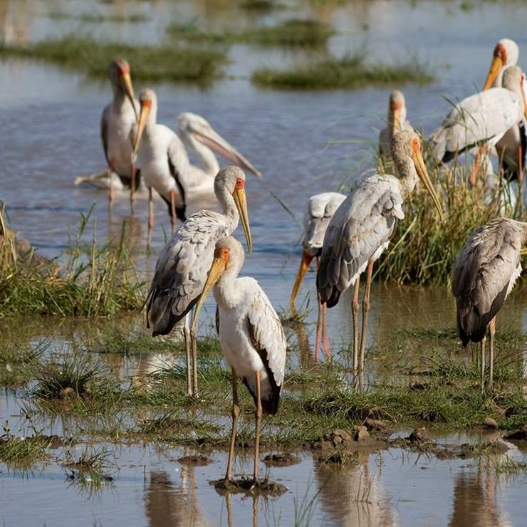 4days bird watching safari: Arusha National Park, Tarangire, Ngorongoro crater